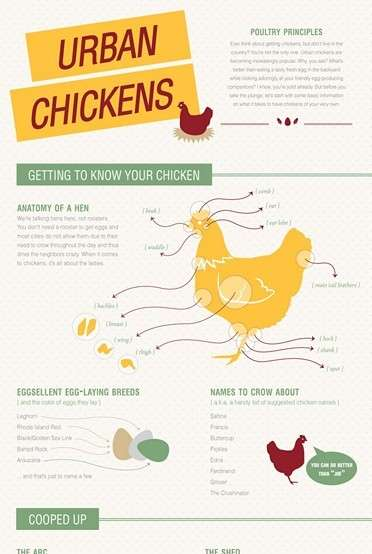 Poultry Fundamentals and Hen Anatomy