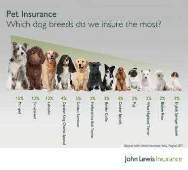 Dog Insurance Breed Wise