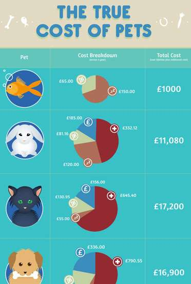Pet Care - Insight into Expenses