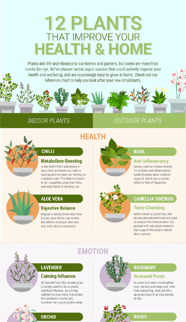 Plants That Improve Your Health & Home